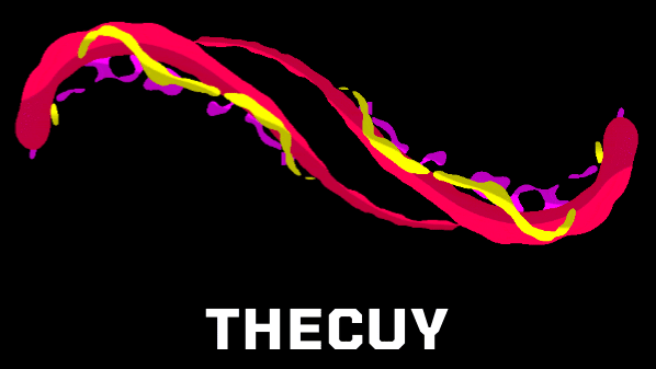 The Cuy