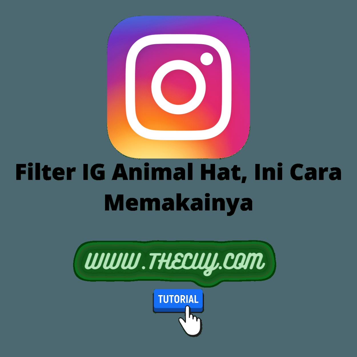 Filter IG Animal Hat, Ini Cara Memakainya